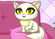 Pisica Perfecta