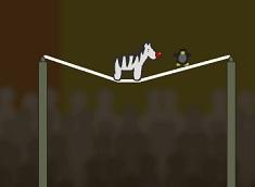 Zebra Zou la circ