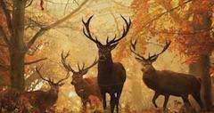 Habitatul Animalelor Obiecte Ascunse