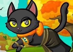 Pisica Perfecta de Halloween